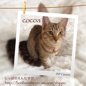 20131121cocoa