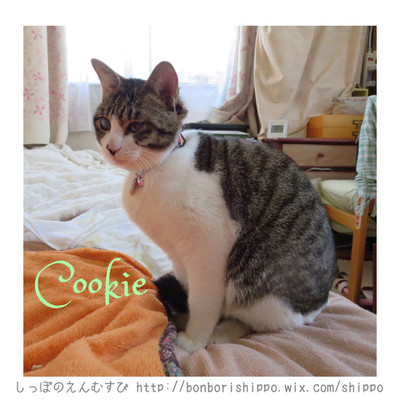 Cookie20140310