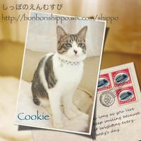 20131125cookie