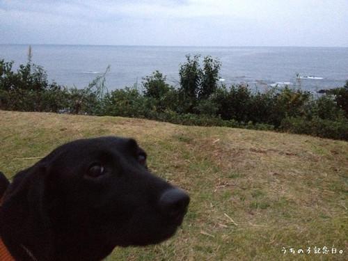 Daikibokouen_kohana_20121123